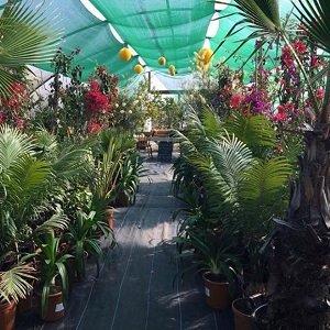 Urban Jungle Suffolk Event Tent