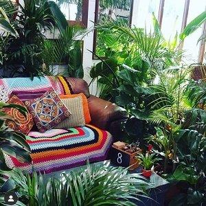 Urban Jungle Suffolk Cafe