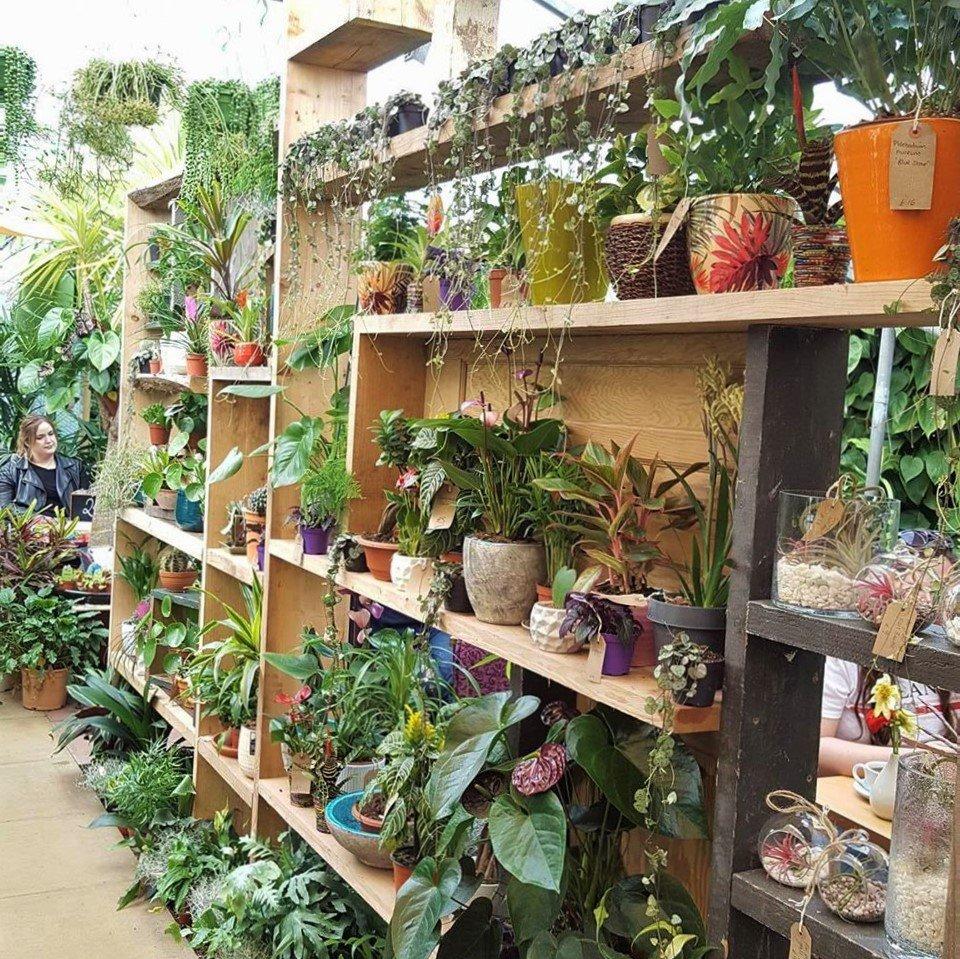 Urban Jungle Shelves